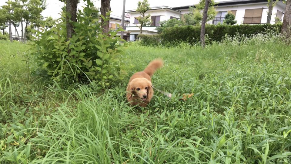 Nozomi in the Weeds