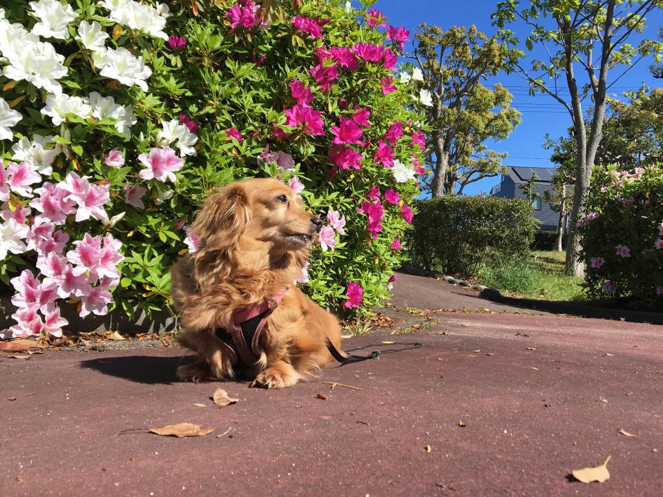 Nozomi Enjoying Her Walk
